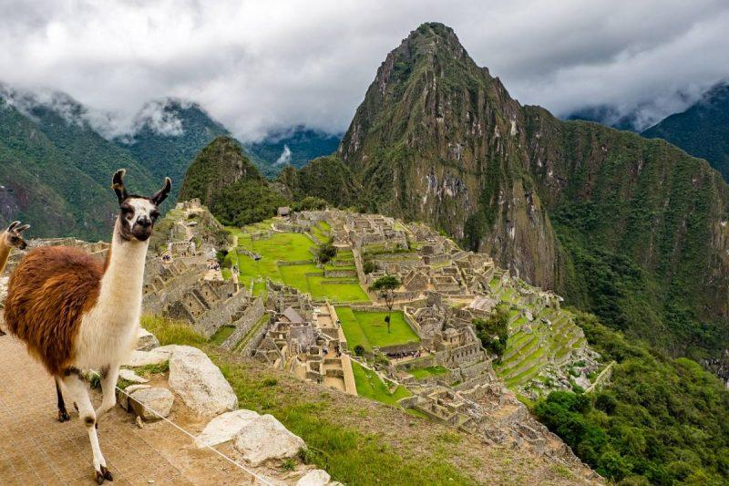 Llama on top of Machu Picchu