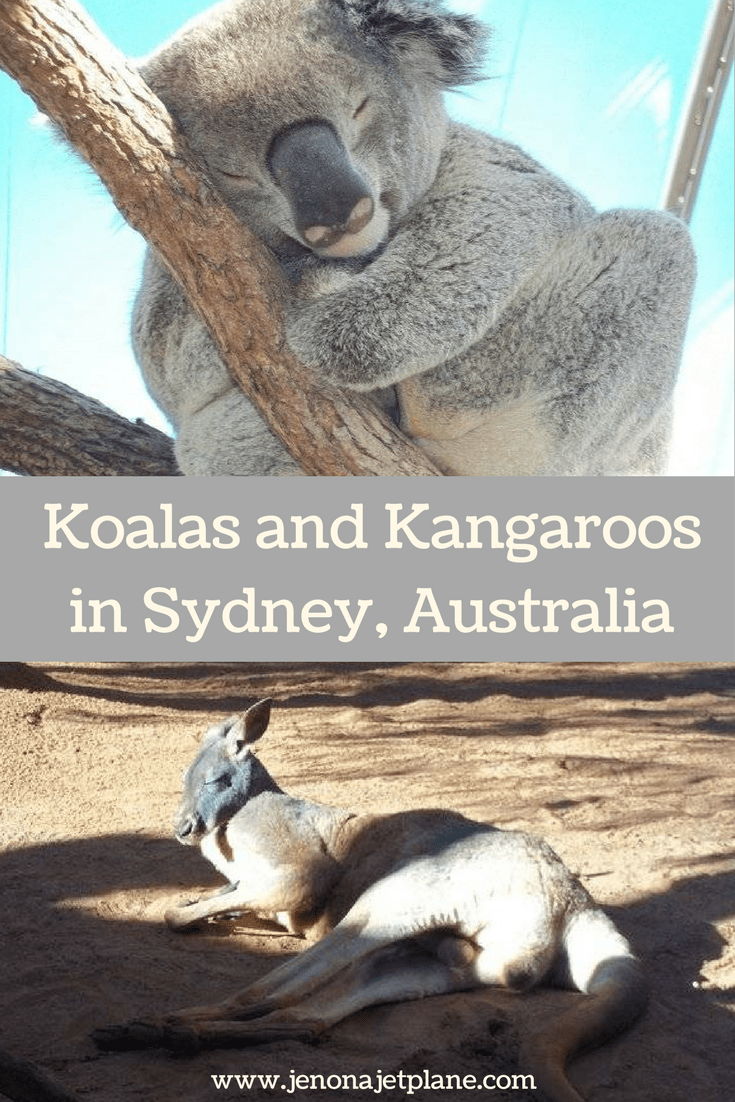 At Wild Life Sydney Zoo guests have the ability to meet a koala and a kangaroo. The last place you'd expect to have a wildlife adventure is in the middle of Sydney!