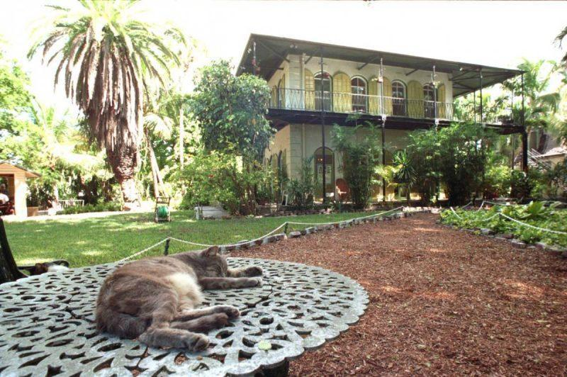 Cat stretched out on table in front of Hemingway house