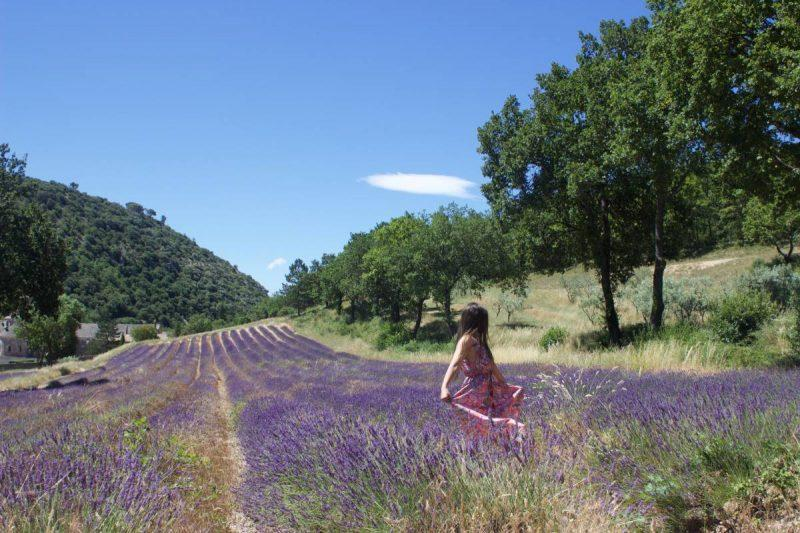 Visiting the Senanque Abbey Lavender Fields in Gordes, France - Jen