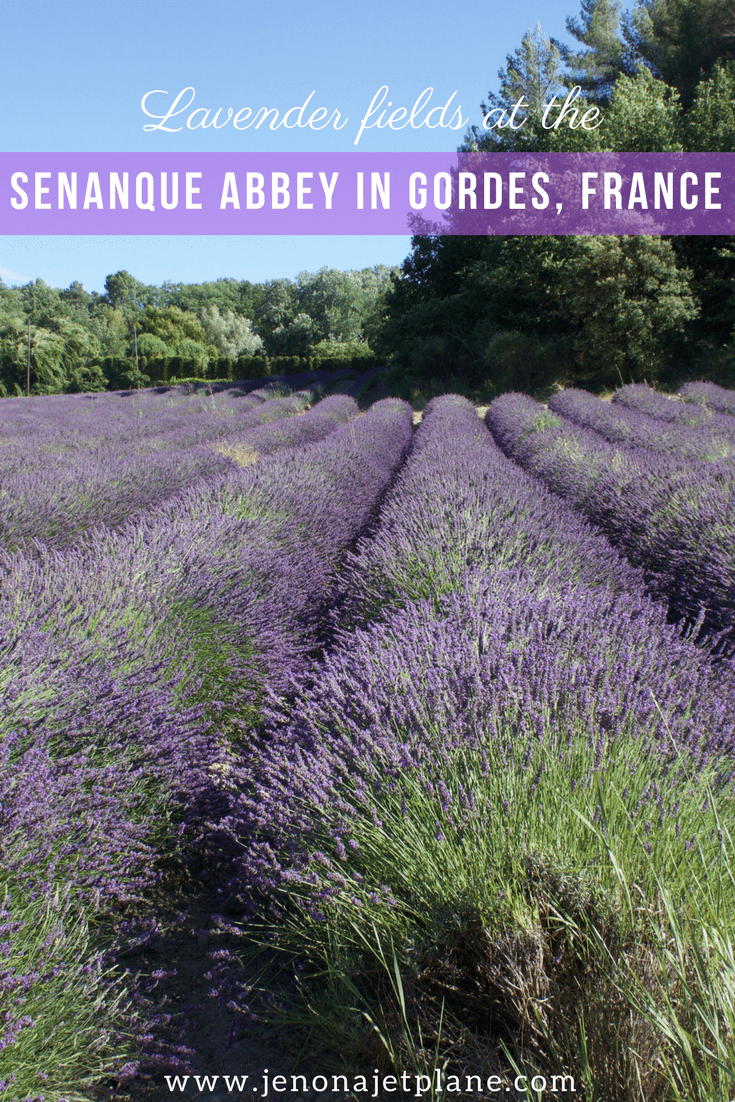 The Senanque Abbey is Gordes, France is a working monastery and home to some of the most beautiful lavender fields in the region. Find out everything you need to know about visiting the Senanque Abbey and seeing fields of lavender in the South of France!