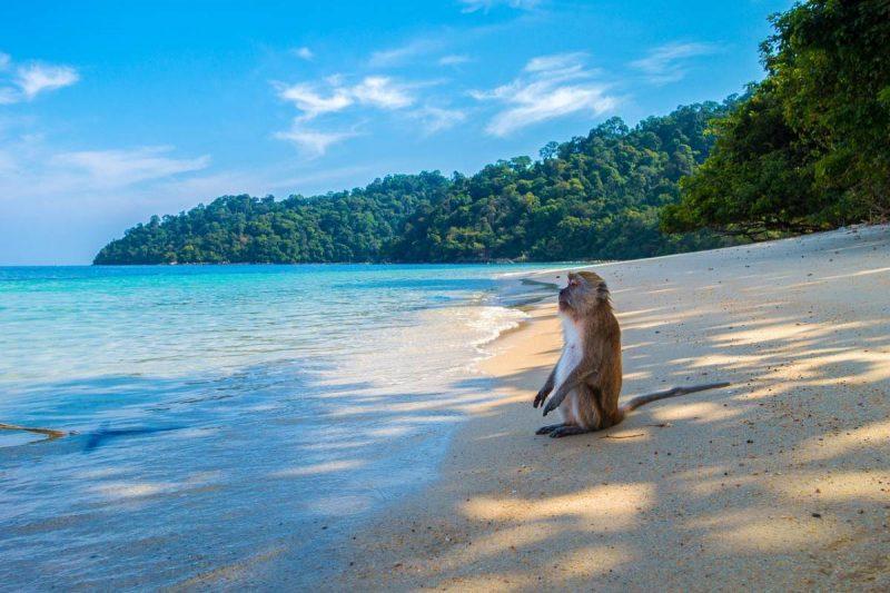 Phuket Sail Tours Review A Day Exploring Phang Nga Bay