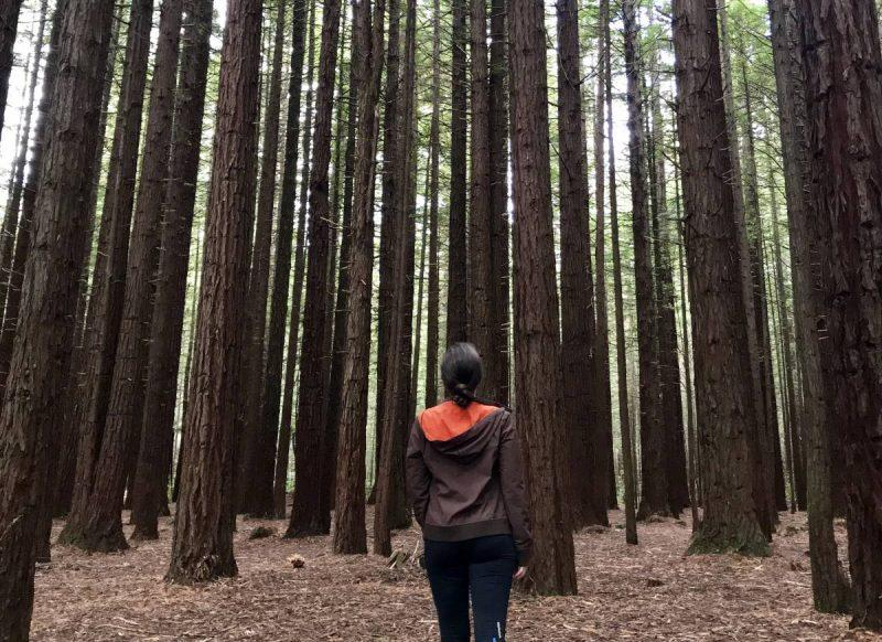 Redwood Forest in Rotorua