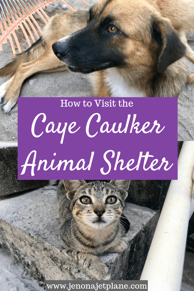 Looking to visit the Caye Caulker Animal Shelter? From directions to adoption fees, here's everything you need to know before you go. #belizetravel #animalshelter #cayecaulker #cayecaulkerbelize #volunteering #belizethingstodo #belizevacation