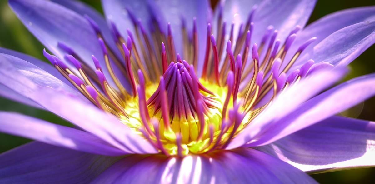 Vivid purple flower