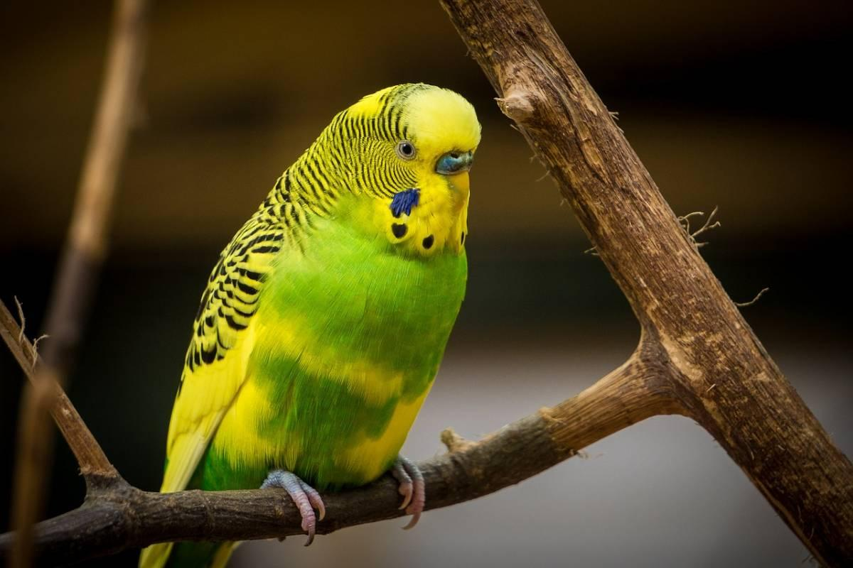 Exotic yellow bird