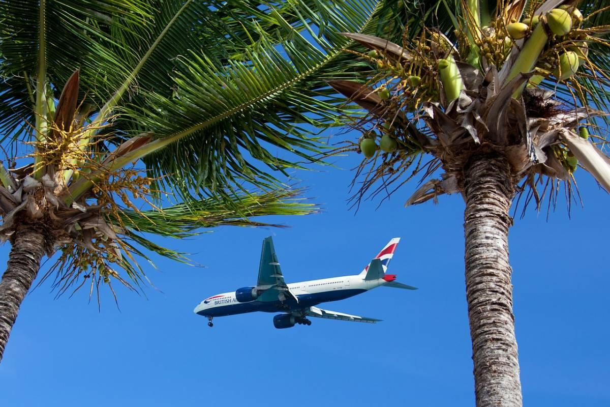 Airplane flying between two palm trees