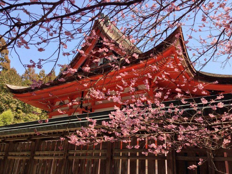 Red temple with cherry blossoms
