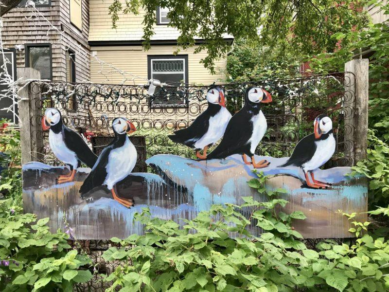 Puffins on a fence