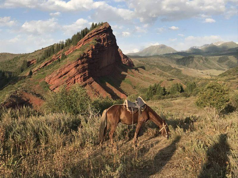 Horse grazing in front of a mountain