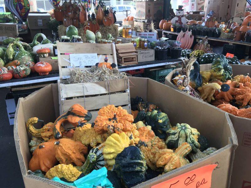 Squash and pumpkins in bins