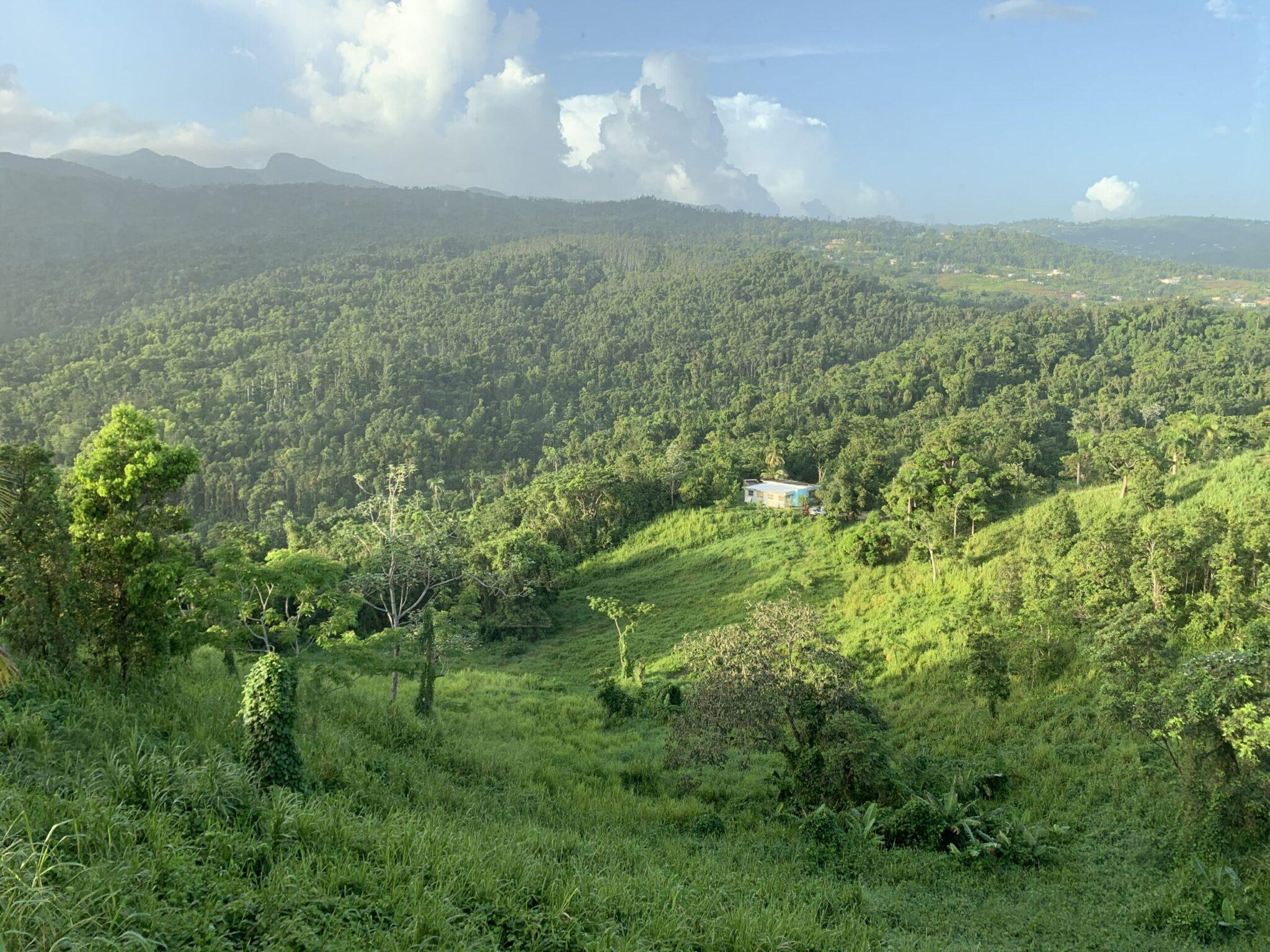 View of El Yunque Rainforest