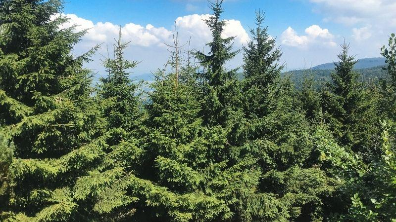 Trees at Radhošť Mountain